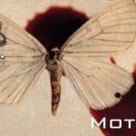 Motylek Katarzyna Puzyńska
